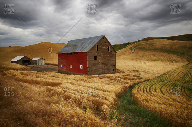Golden wheat fields on rolling hills with a wooden barn and other farm structures, Palouse, Washington, United States of America