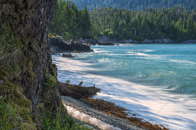 The surf pounds the shoreline, Haida Gwaii, British Columbia, Canada