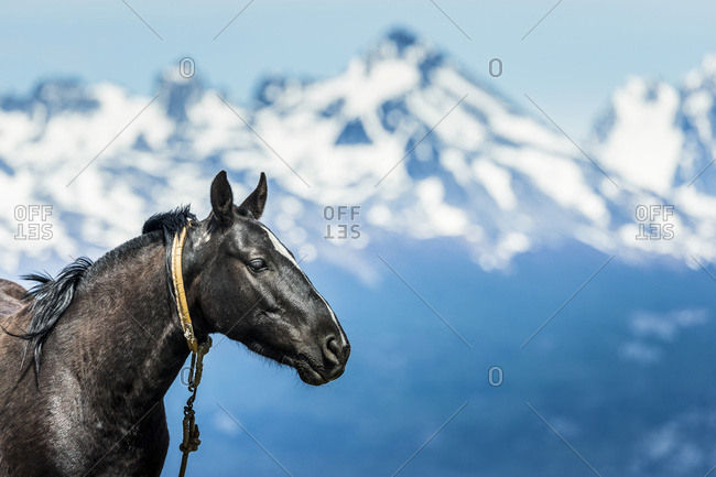 Horse and Andes mountains in the distance, Ushuaia, Tierra del Fuego, Argentina