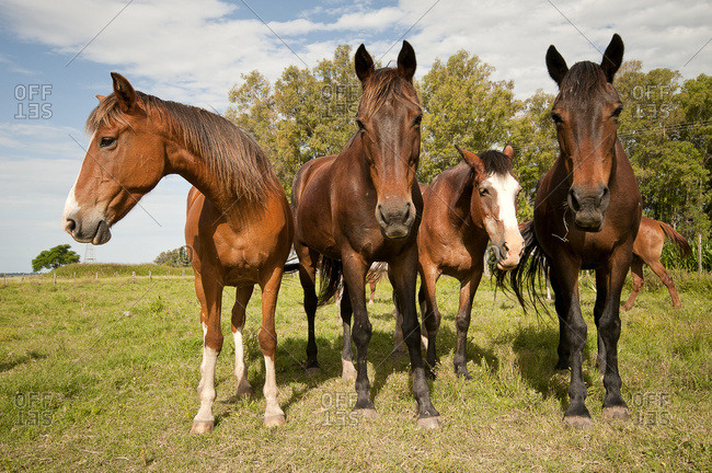 Inquisitive horses in a pasture
