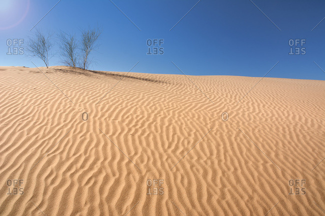 Three small bushes grow at the top of a sand dune, Mendoza, Argentina