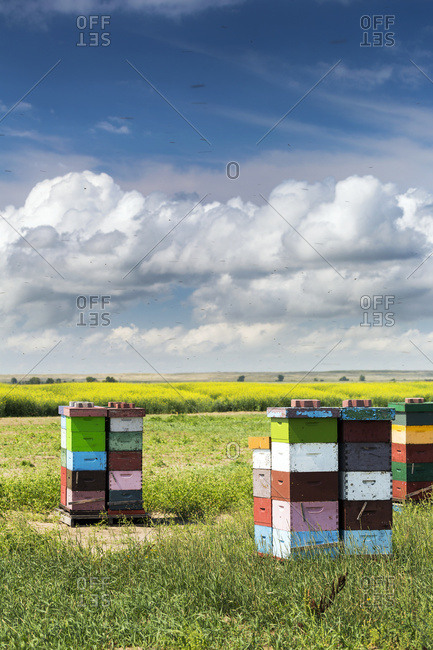 Colorful stacked bee hive boxes in a field with clouds above, North of Rolling Hills, Alberta, Canada