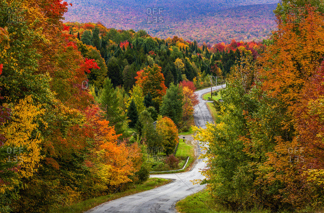Autumn colored foliage on the trees lining a country road, Sutton, Quebec, Canada