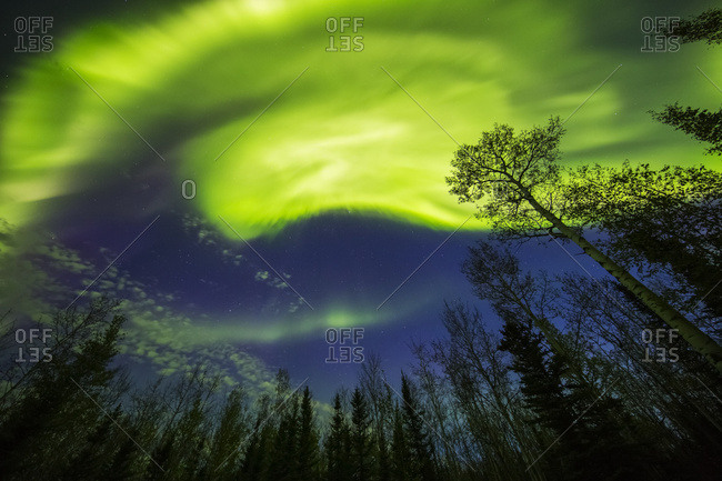 A bright aurora display shines above trees, Alaska, United States of America