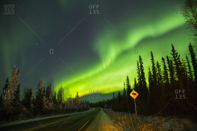 The aurora glows over a moose crossing sign along Sheep Creek Road, Fairbanks, Alaska, United States of America