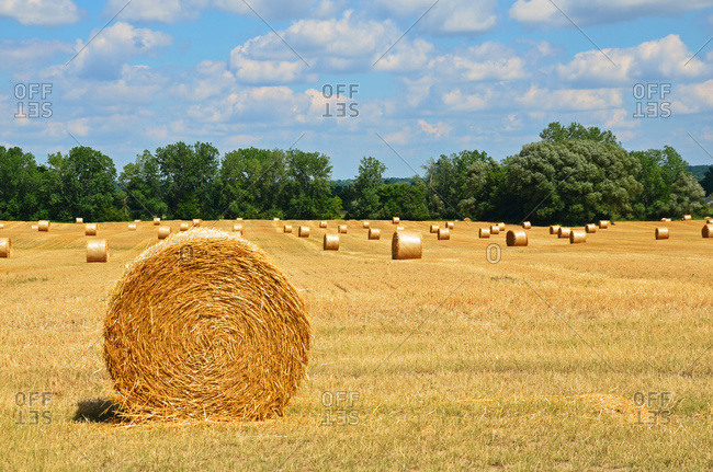 Bales of hay in a field with trees on the edge of the field under blue sky with cloud, New York, United States of America