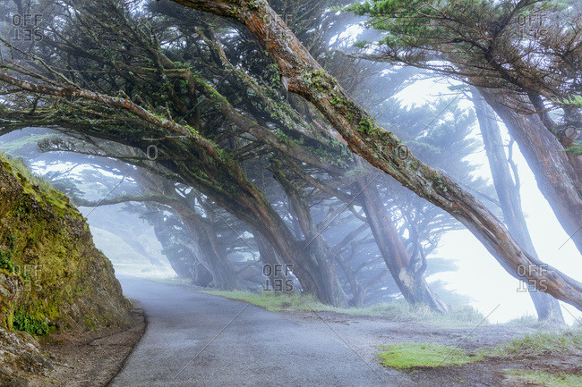 Trees in the fog, Point Reyes, San Francisco, California, United States of America