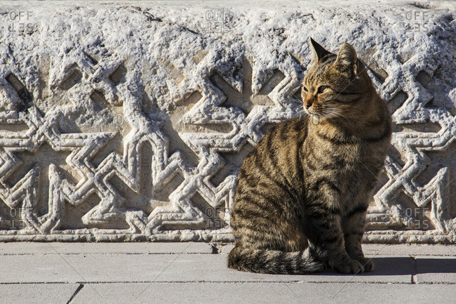 Cat sitting in the sunlight by a carved stone wall, Aksaray, Turkey