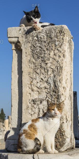 Cats among the ruins, Ephesus, Izmir, Turkey