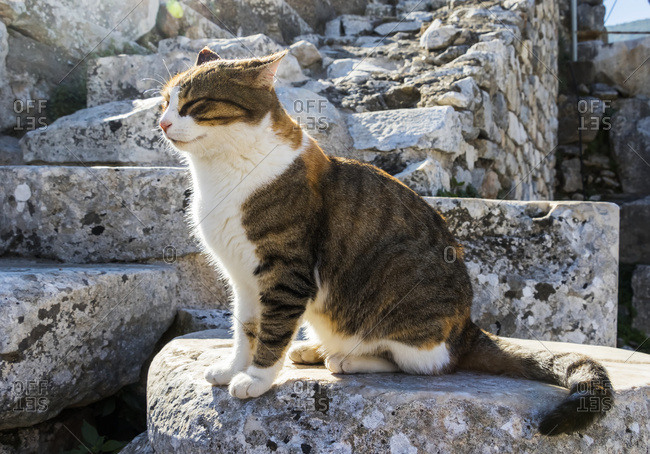 Cat in the Amphitheatre, Ephesus, Izmir, Turkey