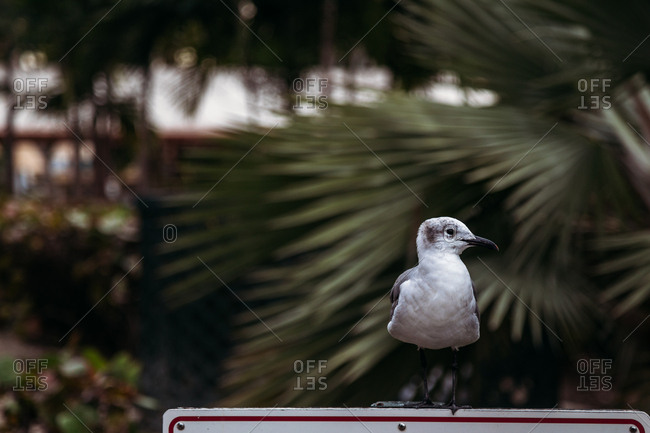 Seagull perched on sign, Florida
