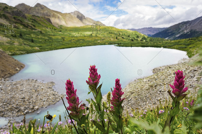 High alpine lake and spring flowers on a sunny spring afternoon