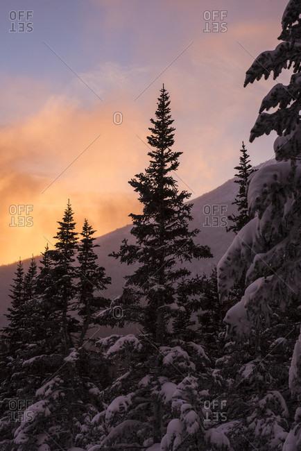 Sunrise and spruce trees on Mount Washington in New Hampshire