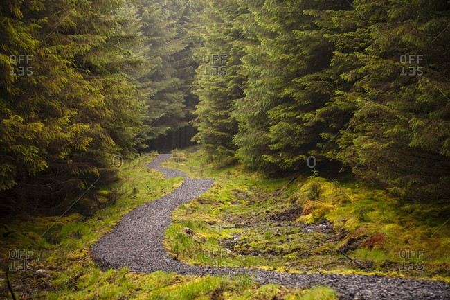 The John Muir Way leads through a forest in Scotland