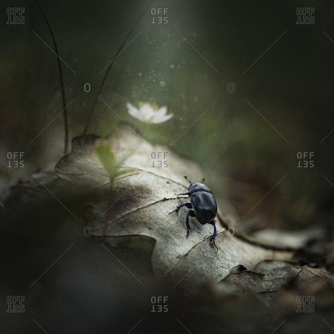 Close up of beetle on leaf