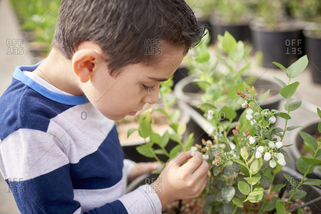 Hispanic boy in greenhouse examining plant