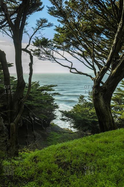 Trees on hill near ocean