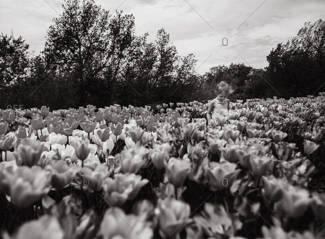 Young girl walking in a field of tulips in black and white