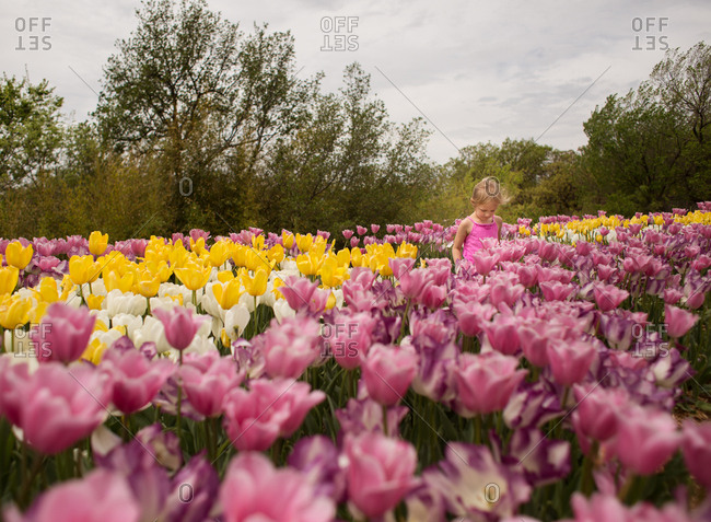 Young girl walking in a field of tulips