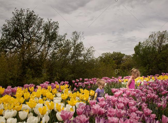 Sisters walking in a field of tulips