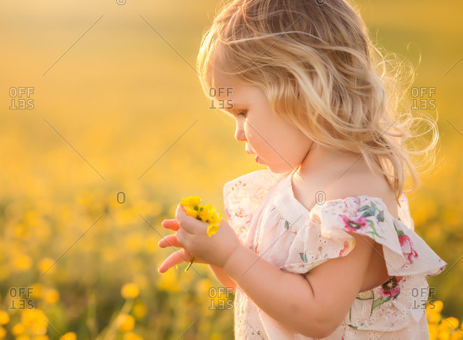 Little girl collecting yellow flowers in a field