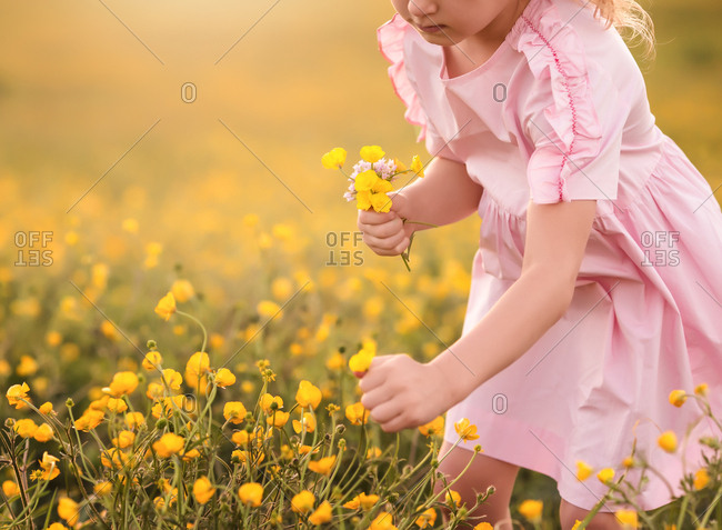 Young girl picking yellow flowers in a field
