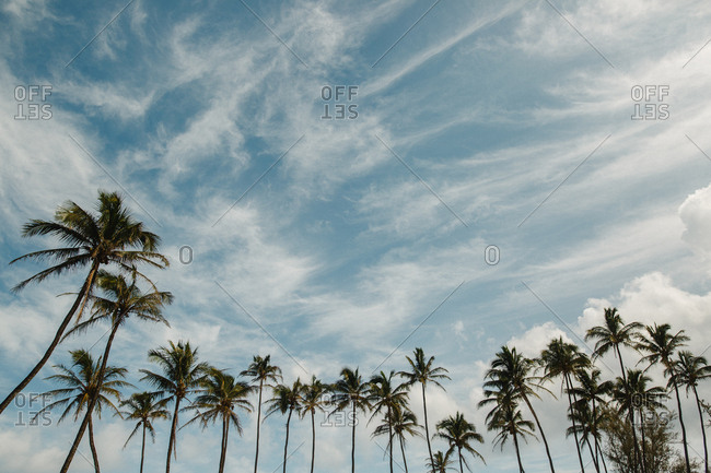 Palm trees and clouds in Hawaii