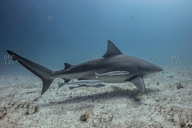 Underwater view of shark swimming near seabed
