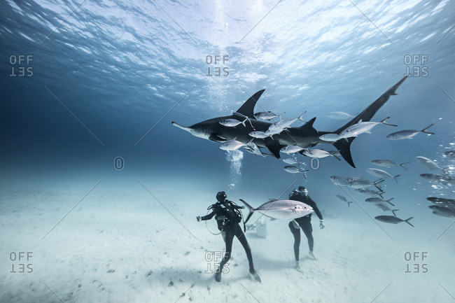 Underwater view of two divers on seabed amongst fish