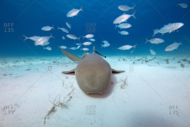 Underwater view of fish swimming over seabed