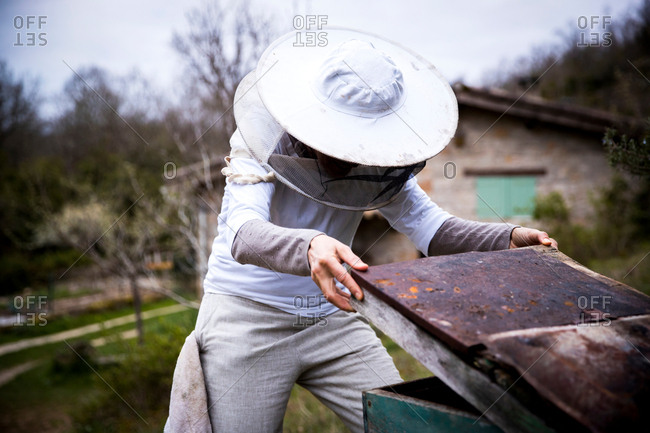 Female beekeeper removing apiary lid in garden
