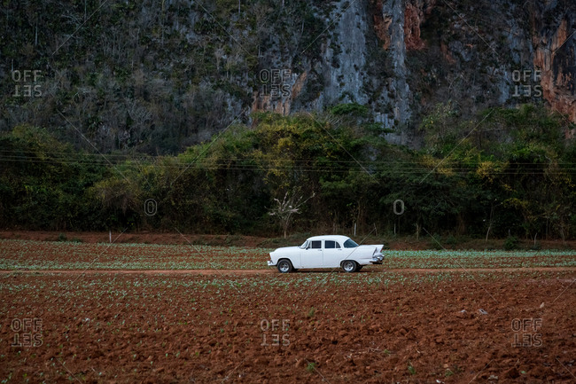 White vintage car on field dirt track, Vinales, Cuba