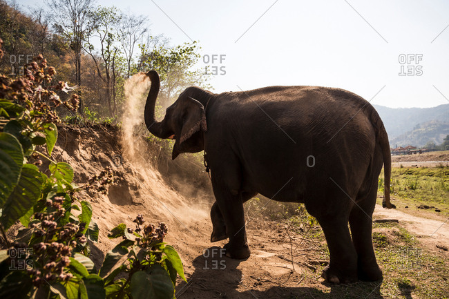 Elephant taking a dust bath in animal sanctuary, Chiang Mai, Thailand