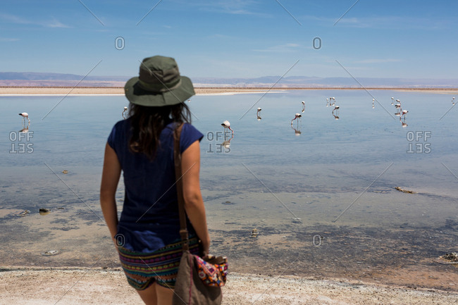Woman looking at flamingos on lake, San Pedro de Atacama, Chile