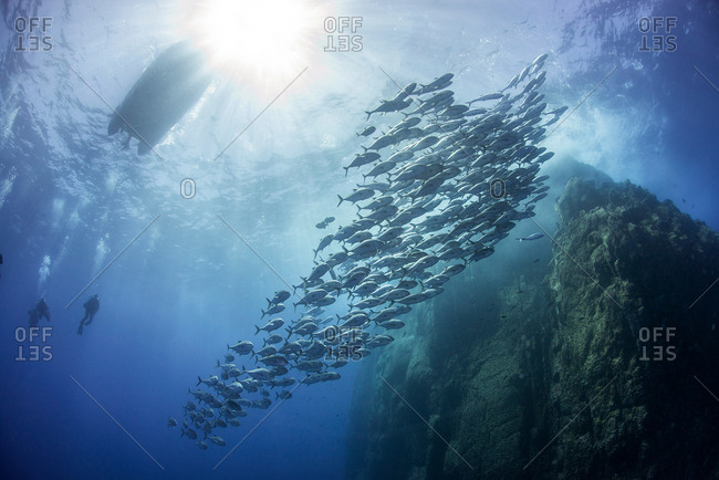 School of jacks around rocks, Roca Partida, Colima, Mexico