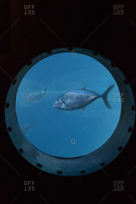 A group of fish swimming past a porthole, Durban, South Africa