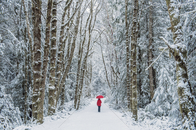 Woman in spruce forest, Bainbridge Island, Washington, US