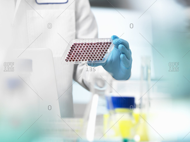 Scientist preparing blood samples in a multi well plate for clinical testing in a laboratory