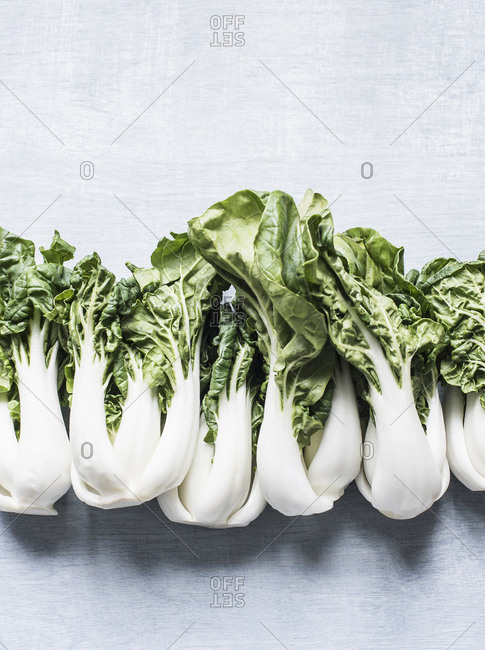 Studio shot, overhead view with row of pak choi