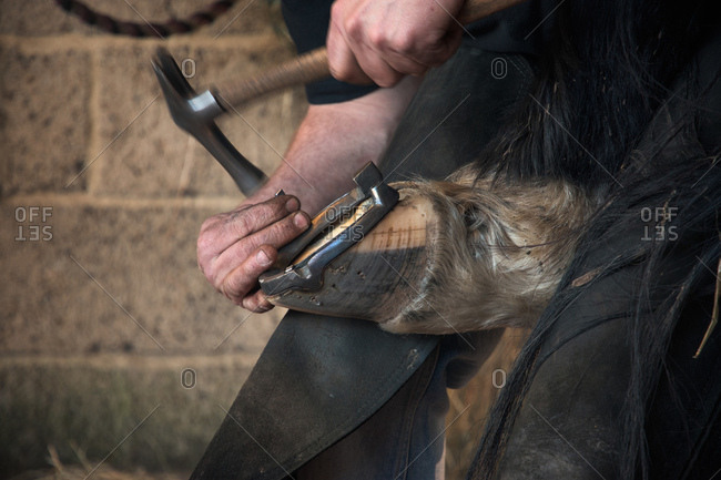 Farrier fitting horse with horseshoes