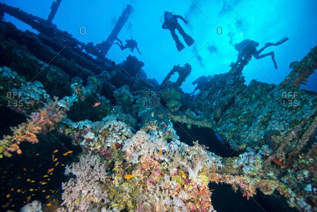 Scuba divers investigating coral covered shipwreck, Red Sea, Marsa Alam, Egypt