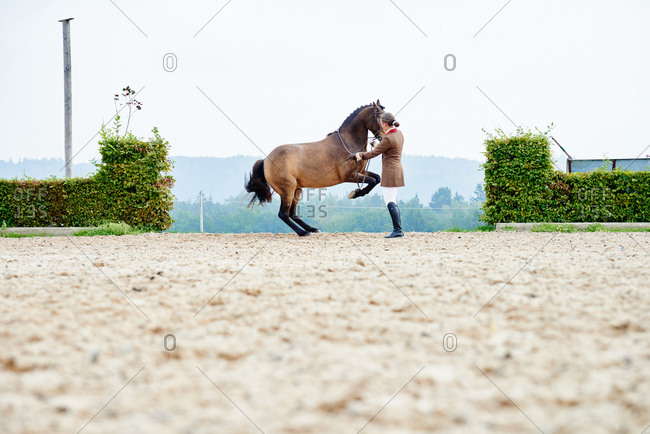 Female rider training dressage horse on hind legs in equestrian arena