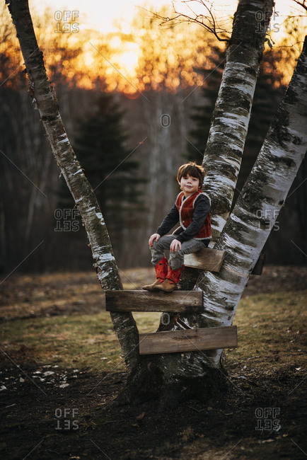 Young boy posing in a tree