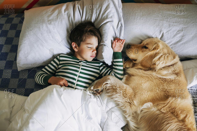 Young boy and golden retriever taking a nap