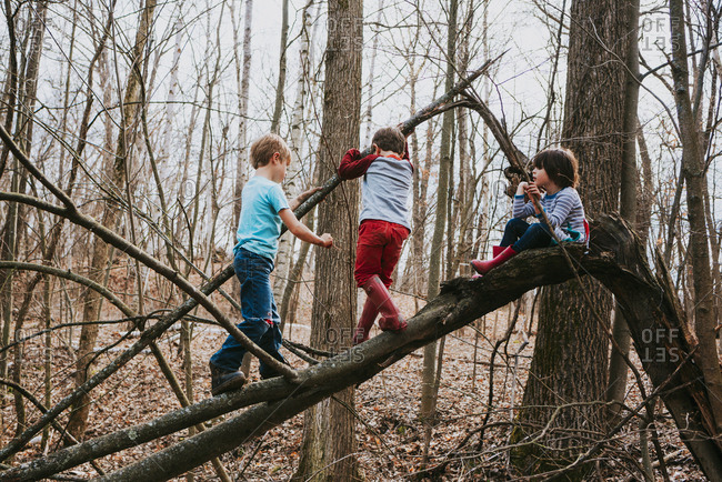 Three young children climbing on a tree