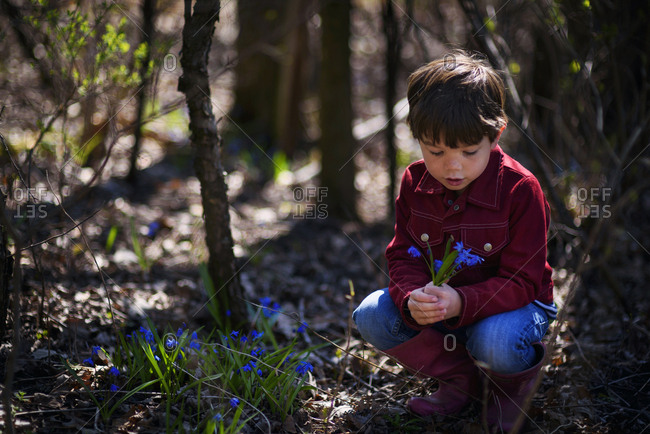 Young boy picking wild purple flowers in the spring