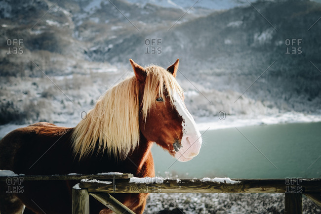 Horse with wooden mane standing near wooden fence in snowy mountains. Horizontal outdoors shot