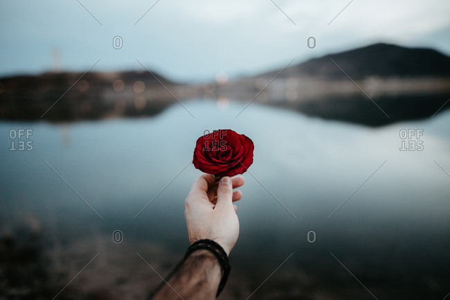 Man hand holding a red rose