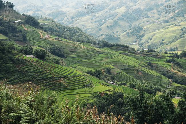 Beautiful landscape about terraced rice field in Sapa. Vietnam