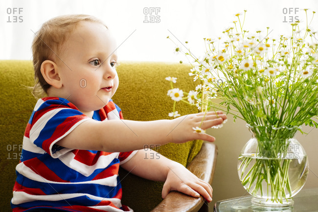 Curious baby boy touching daisies in vase